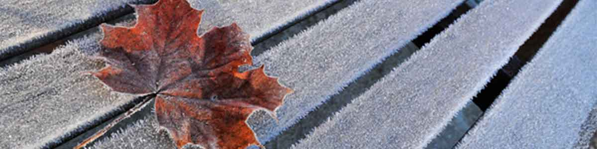 Stay updated on changes to services during the adverse weather